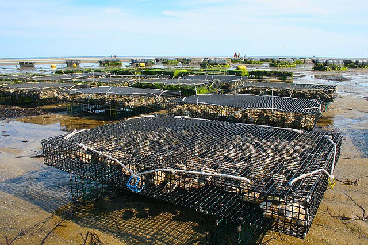 U sljedećih deset godina predviđeno povećanje proizvodnje u akvakulturi za 30 posto